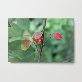 Small Red Leaves Metal Print