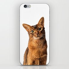 Abyssinian Eyes iPhone & iPod Skin