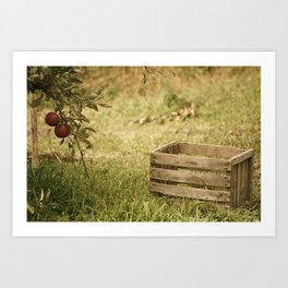 apple crate photograph Art Print