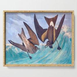 Fork-tailed Storm Petrel John James Audubon Vintage Illustration Birds of America Serving Tray