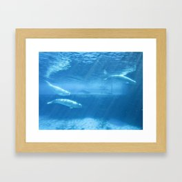 Ocean Blue Beluga Pairs Version 2 Framed Art Print