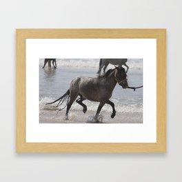Horse Splash  Framed Art Print