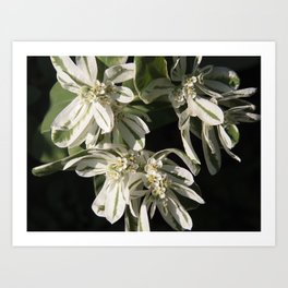 Green and White Flowers Art Print