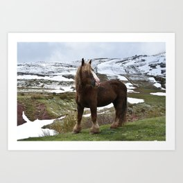 Horse in the Mountain Landscape Art Print