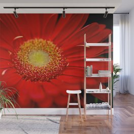Red Daisy close up Wall Mural