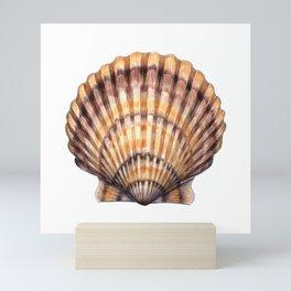 Bay Scallop Mini Art Print