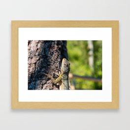 As the lava lizard lazes about Framed Art Print
