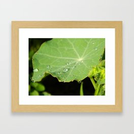 Morning Nasturtium Framed Art Print