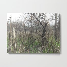 Elephant in tall Grass - Chitwan National Park, Nepal Metal Print