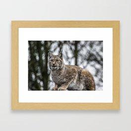 Lynx. Framed Art Print