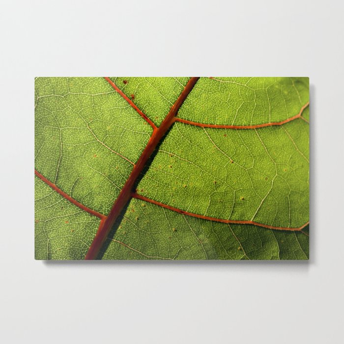 Leaf Veins II Metal Print