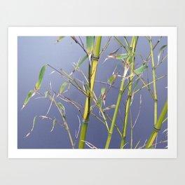 Bamboo leggings Art Print