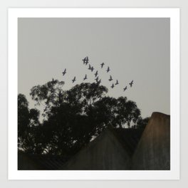 Nightfall flight Art Print