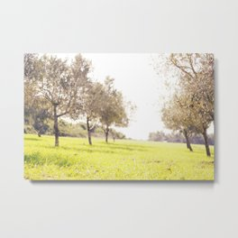 Olive trees heaven - Israel Metal Print