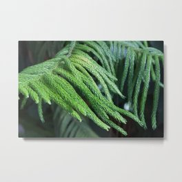 What could nature wear today? Metal Print