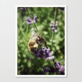Tasty Lavender Canvas Print