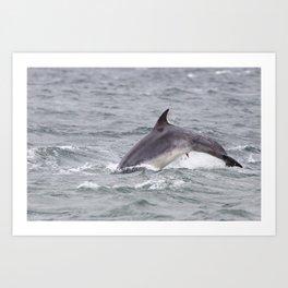 Horny dolphin Art Print