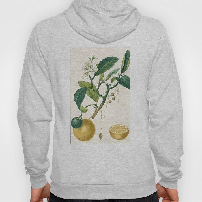 Lemon tree Vintage illustration Hoody