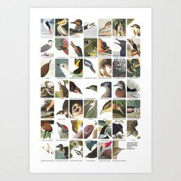 Birds of America Art Print