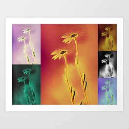 Daisies in many colors Art Print