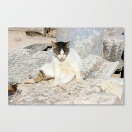 Stray Cat Straight Chilling Canvas Print