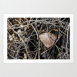 Lone Leaf Art Print