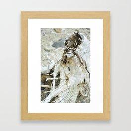 Deer Isle Series: Sea Stump Framed Art Print