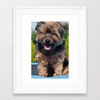 yorkie Framed Art Prints featuring Yorkie by Sammycrafts