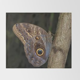 Owl butterfly in Costa Rica - Tropical moth Throw Blanket