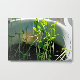 Sprouts Metal Print