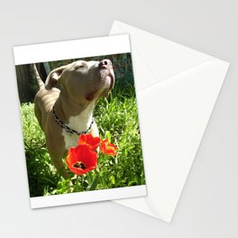 A pit bull and his tulips Stationery Cards