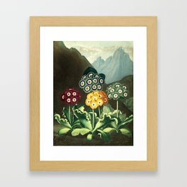 Group of Auriculas :  Temple of Flora Framed Art Print