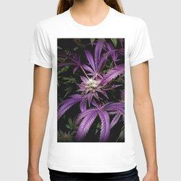 Purrple T-shirt