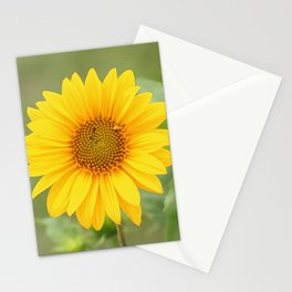 Sunflower, nature photography, single flower with no fitler Stationery Cards