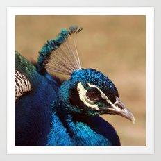 Indian Peacock Headshot Art Print