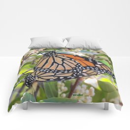 Monarch Mating Comforters