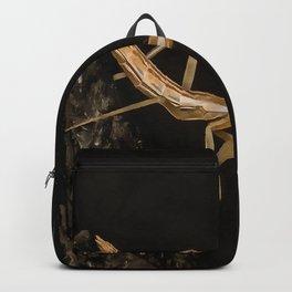 Praying Mantis Isolated on Black Backpack