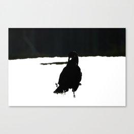 Bird Series CROW 1 Canvas Print