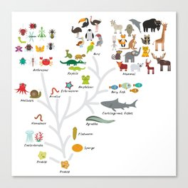 Evolution in biology, scheme evolution of animals on white. children's education back to scool Canvas Print