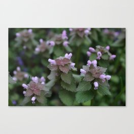 depthoffield Canvas Print