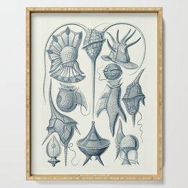 Ernst Haeckel Peridinea Plankton Serving Tray