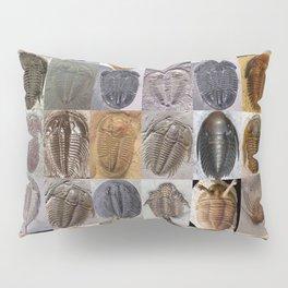 Trilobite Montage Pillow Sham
