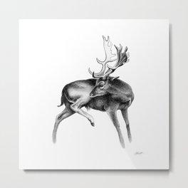 Fallow Deer Stag Metal Print