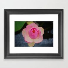 Lotus Blossom Flower 32 Framed Art Print