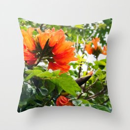 The beautiful red flowers of the African Tulip Tree Throw Pillow