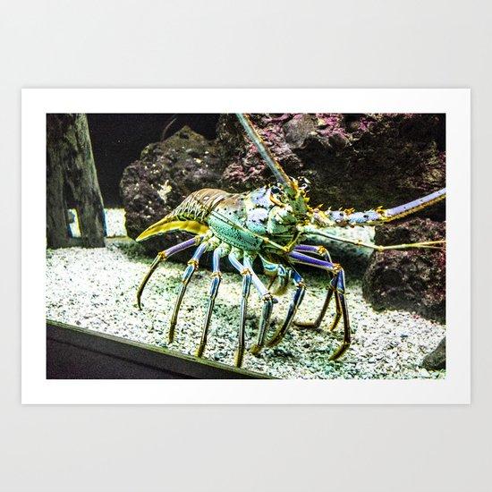 Colorful Crustacean Art Print