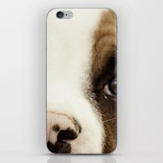 Boxer Nose iPhone & iPod Skin