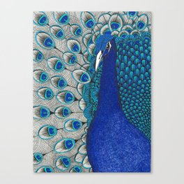 Peacock Pride Canvas Print