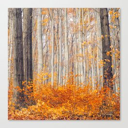 orange autumn Canvas Print