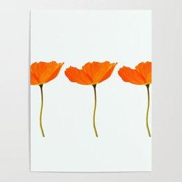 Three Orange Poppy Flowers White Background #decor #society6 #buyart Poster